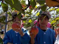 りんごがり.jpg