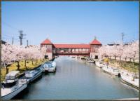 内川と桜の写真