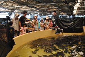 ヒラメの餌やり体験