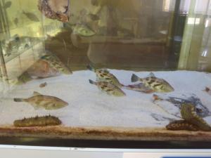水槽の中を泳ぐ魚